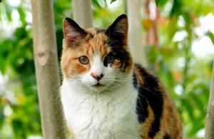 Is it True That All Calico Cats Are Female?