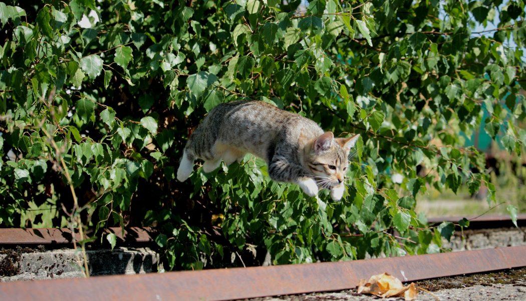 cat 9 lives