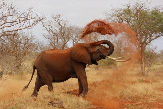 elephants afraid of mice?
