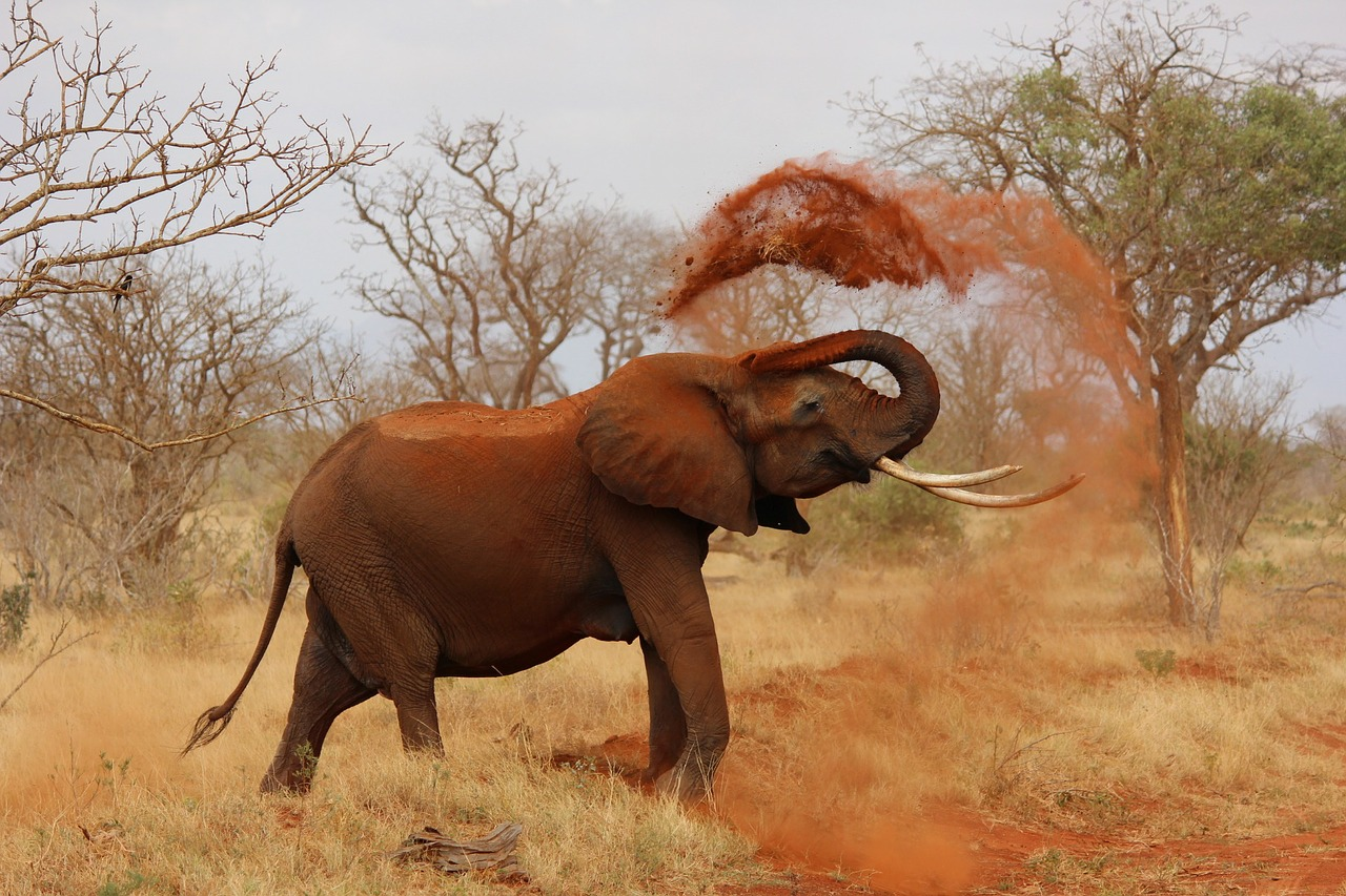 Is it True That Elephants Are Afraid of Mice?