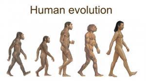 Human evolution essay